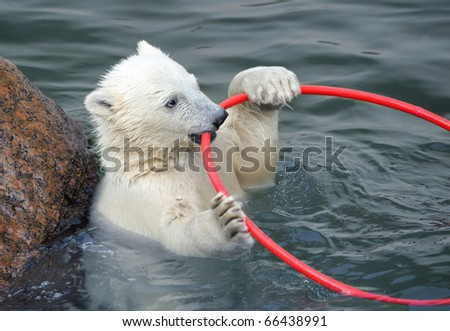Little white polar bear playing in water