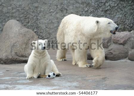 Little white polar bear with soccer ball