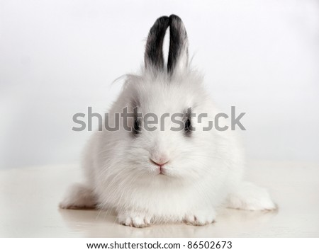 Little white rabbit sitting on a white surface