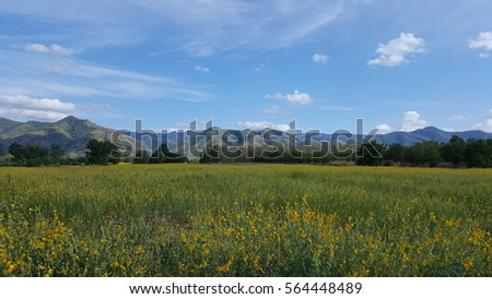 Little yellow flowers grass background with mountain light blue sky little yellow flowers grass background with mountain light blue sky mightylinksfo