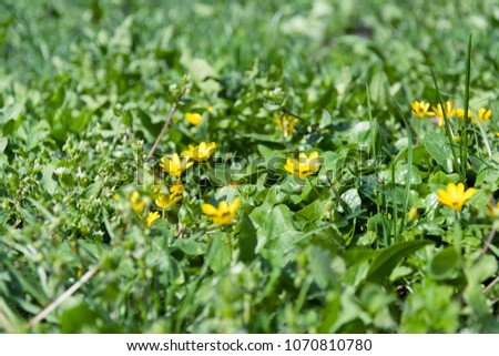 Free photos little yellow flower with grass avopix little yellow flowers on grass in garden 1070810780 mightylinksfo