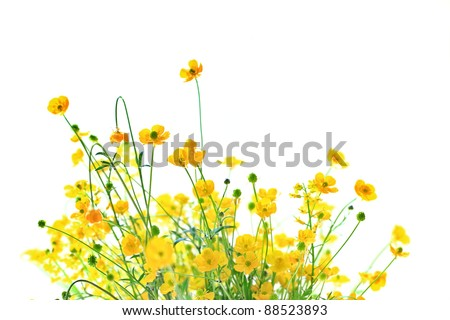 Little yellow flowers on white background and copy space #88523893
