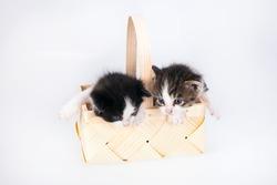 Littles kitten in a wood basket on white background.