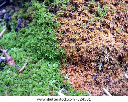 Live Rock Plants Live And Dead Moss Plants