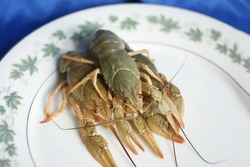 live crayfish. green crayfish on a plate