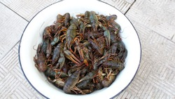 Live crayfish in a white bowl. River crayfish. A full bowl of live crayfish.