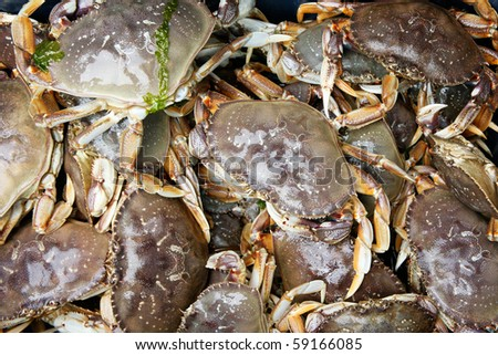 Live Dungeness Crabs in the Pacific Northwest