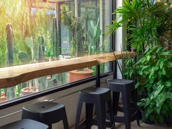 Live edge bar table and black chairs with the green garden in cafe with cactus garden outside the glass window.