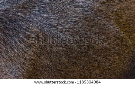 Live Moose Fur Background