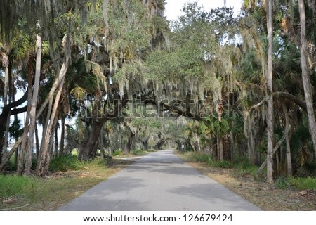 Live Oak covered road in central Florida