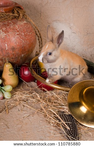 Live rabbit and hunting horn in a vintage autumn still life