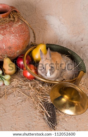 Live rabbit in a hunting still life with antique wine jug, bugle and autumn fruits