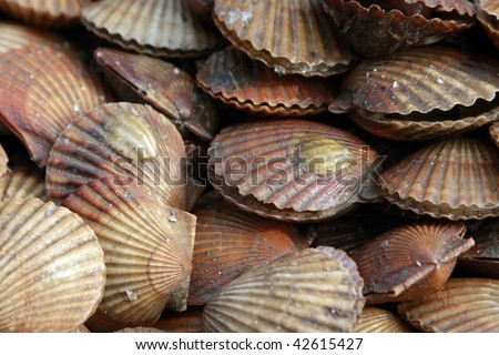 What does a live scallop look like