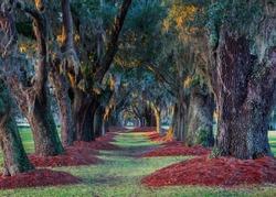 Live southern oak trees at Avenue of the Oaks near the entrance to the Lodge At Sea Island Golf Club in Saint Simons Island, Georgia