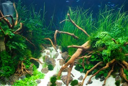 Lively coral and water plant. Bright colors, nature under the ocean.