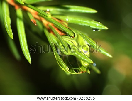 Lively green branch with a rain drop on it