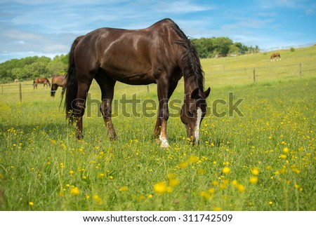 how to get rid of buttercups in horse field