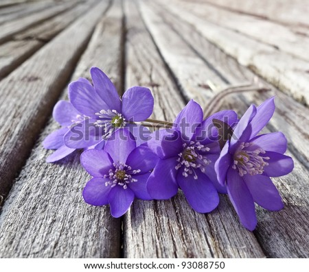liverwort flowers on wooden table
