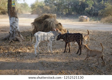 Livestock and dogs #1252521130