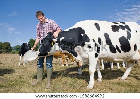 Livestock Farmer Feeding Cattle In Field