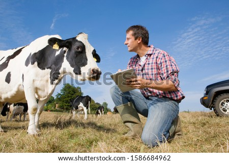 Livestock Farmer In Field With Cattle Using Digital Tablet