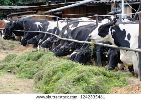 Livestock in a barn #1242335461