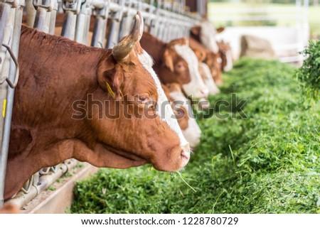Livestock in the barn #1228780729