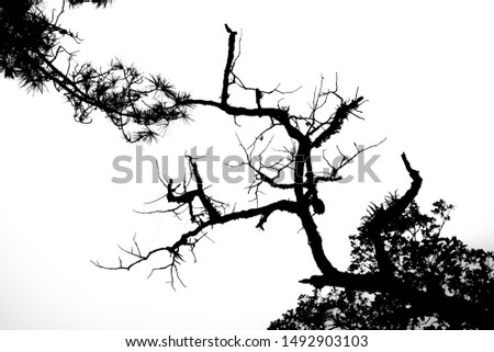 Living branches and dead branches #1492903103