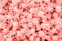 Living Coral background made of roses and many flowers, copy space. Color of the year 2019. Nature floral background. Top view, flat lay. Valentine's Day, Woman's Day (March 8), Mother's Day, birthday