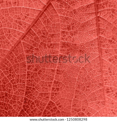 Living Coral leaf texture with small drops and tiny veins #1250808298