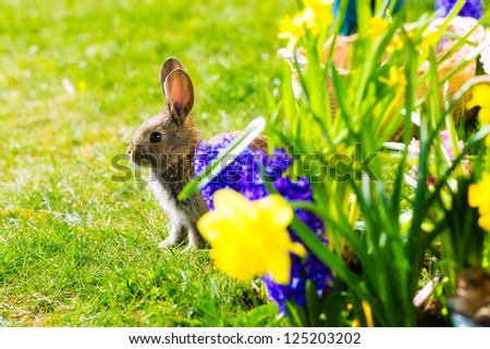 Living Easter Bunny behind flowers on a meadow in spring