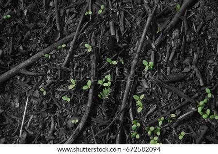 Living green Buds #672582094