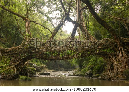 Living roots bridge near Riwai village, Cherrapunjee, Meghalaya, India. This bridge is formed by training tree roots over years to knit together. Stock fotó ©