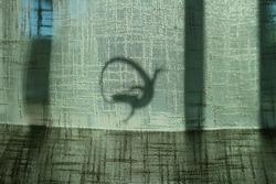 Lizard attack on window indoor shadow dragon round shape