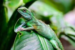 Lizard green background