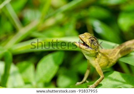 Lizard in green nature or in park or in the garden