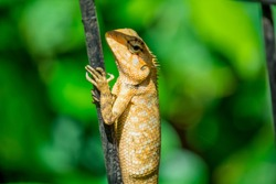 Lizard is a type of reptile that has scaly skin, a long body, pointy tail and usually four legs.
