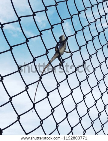 Lizard on fence with sky background #1152803771