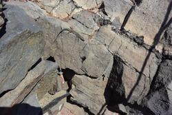Lizard resting on rock, Madeira, Portugal