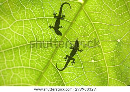 Stock Photo lizard's shadow on leaf