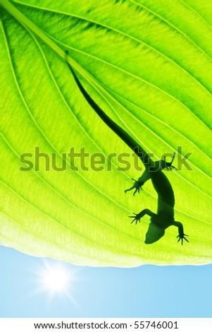 lizard silhouette on green leaf