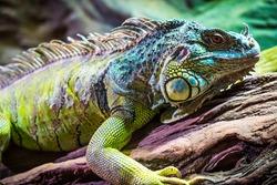 Lizard sitting on a tree.