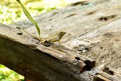 Lizard sitting on the wooden bench