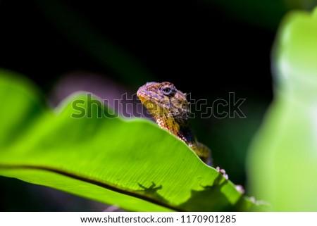 Lizard taking sunbathe, Chameleon sunbathe in morning with blur nature background. #1170901285