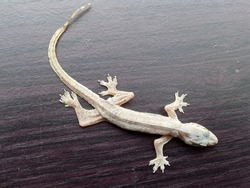 Lizards are reptiles that usually crawl on walls or trees.