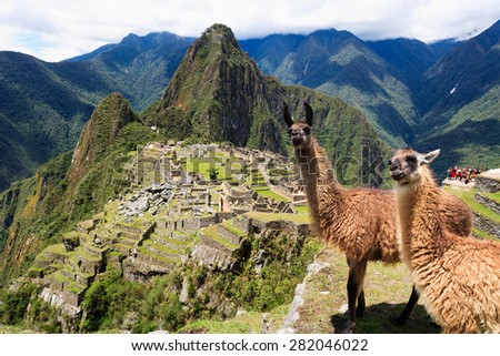 Llama at Historic Lost City of Machu Picchu - Peru #282046022