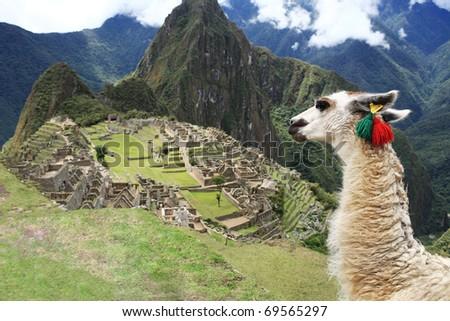 Llama at Historic Lost City of Machu Picchu - Peru #69565297