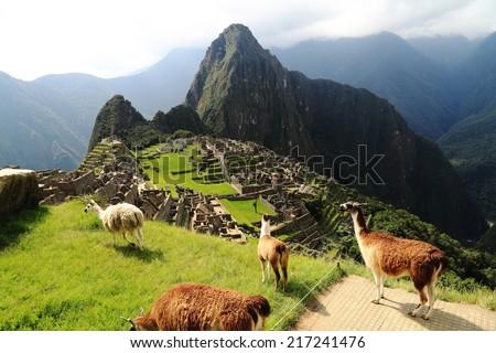 Llama at Machu Picchu in Peru #217241476