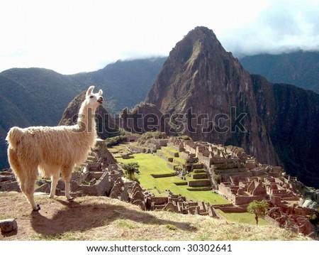 Llama at Machu Picchu, Peru, Inca, Cuzco, Andes, South America, Inka, Anden, #30302641