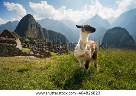 Llama in the ancient city of Machu Picchu, Peru. Overlooking ruins of the Inca citadel in the Andes Mountains and the river valley below